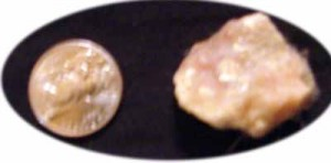 Rawhide removed from Neptune's stomach (left) compared to a quarter (right) to show size.
