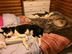 Che and Peetie -- son and father on the bed
