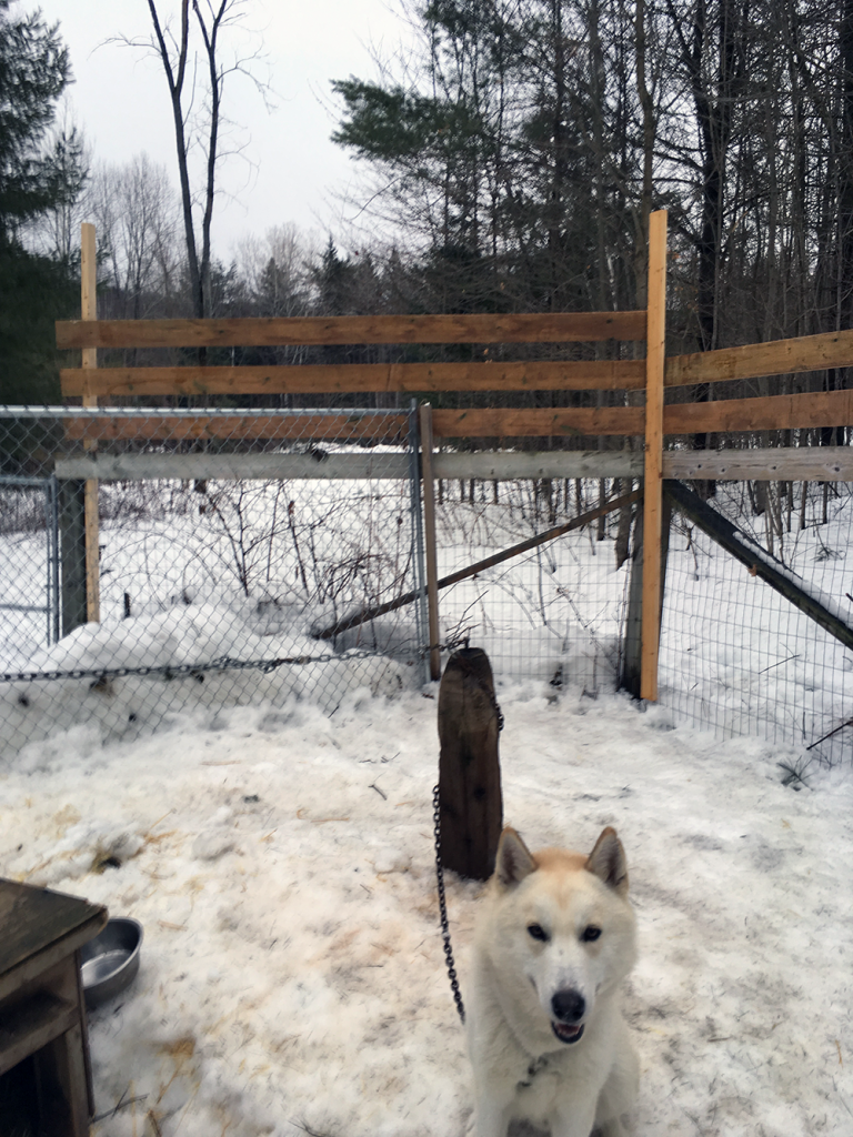 Jack's New Fence, Featuring Moose