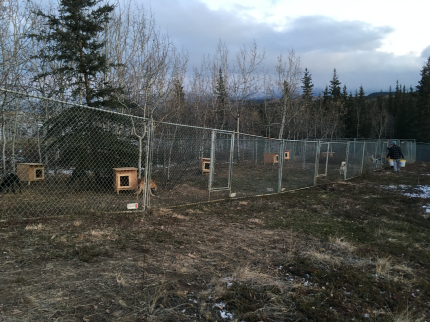 Fence Kennels